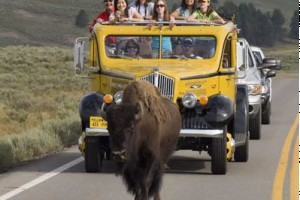 Family Vacations: Explore Yellowstone Together :: Experience the magic of Yellowstone with a unique family adventure. Explore canyons, waterfalls, and geyser basins with an expert guide, and enjoy a variety of activities.