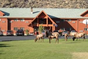 Yellowstone Village Inn - the best in Gardiner