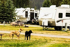 Yellowstone KOA Mountainside - dog friendly